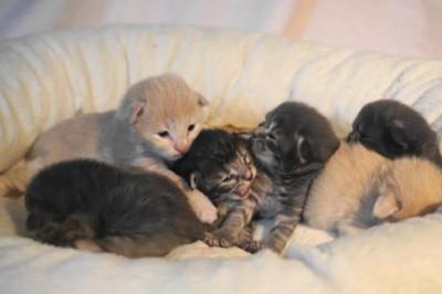 Cats-kullen 1 vecka. Fr v: Jennyanydots, Bustopher Jones, Miss Mistofeles, Grizabella, Rum Tum Tugger & Macavity